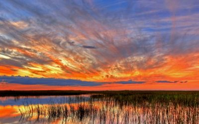 Bezoek het Everglades National Park in Florida